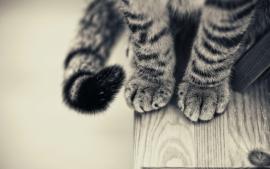 Poster Kattenpootjes