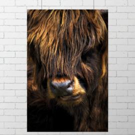 Poster Schotse Hooglander III