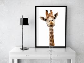 Poster - Giraffe - witte achtergrond A3