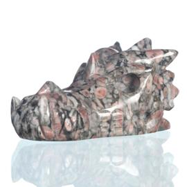 Drakenskull crinoid fossiel 5,3 cm