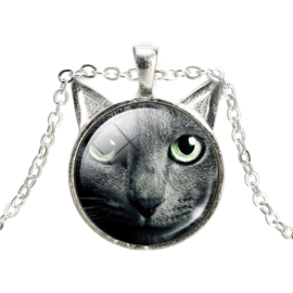 Ketting grey cat