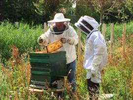 Honing kan hoesten bij COPD klachten verminderen