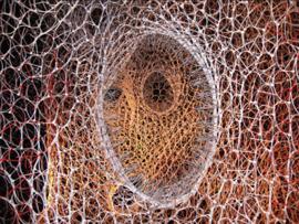 Speciale longcellen reageren heftiger bij COPD