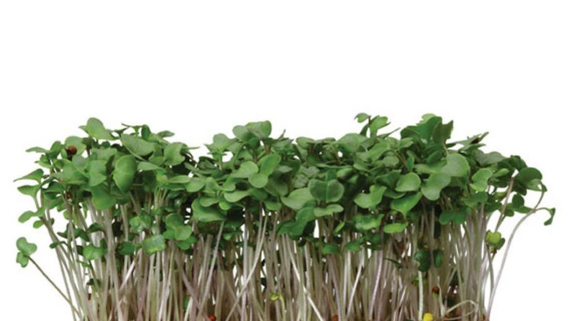 Broccoli kiemzaadjes  (Broccocress)