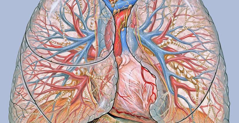 Hoe gaat lucht in en uit je longen? ( uitgebreide versie )
