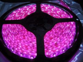LED strip 175cm, deep pink, 16,8W 24V