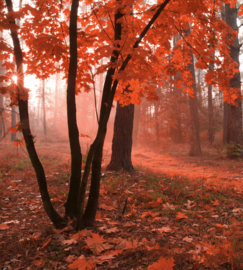 Misty Forest Fotobehang MS-3-0095