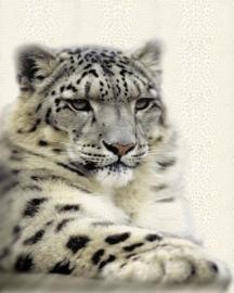 ROBERTO CAVALLI RC 12074 luipaard glitter