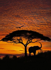 Komar National Geographic fotobehang African Sunset 4-501