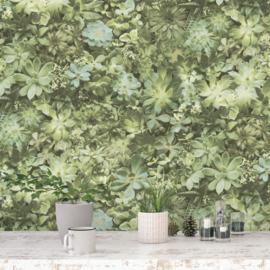 Noordwand Evergreen Behang 7320