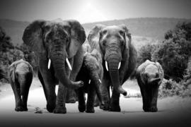 160 x 80 - Glasschilderij - schilderij fotokunst dieren - Kudde olifanten - foto print op glas
