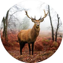 80 cm rond - Glasschilderij - rond schilderij fotokunst dieren - Hert - foto print op glas