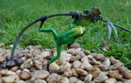 Tuinbeeld - glassculptuur - beeld - groene kikkers