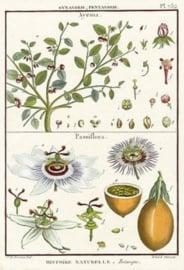 80 x 120 cm - Plexiglas schilderij- Plant - kunst afbeelding op acryl