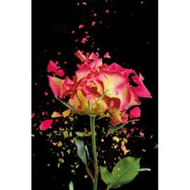 80 x 120 cm - Schilderij Dibond - Foto op aluminium - Fotokunst Roze roos - Mondiart - bloemen