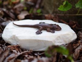 Tuinbeeld brons - bronzen beeld salamander - Bronzartes