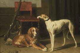 Schilderij Dibond - Honden