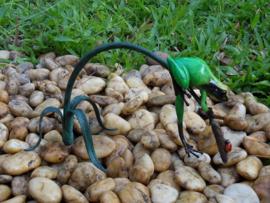 Tuinbeeld - glassculptuur - beeld - groene kikker