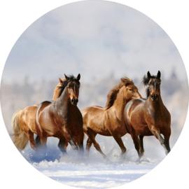 80 cm rond - Glasschilderij - rond schilderij fotokunst dieren - Kudde paarden - foto print op glas --