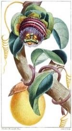 Foto op hout - Planten
