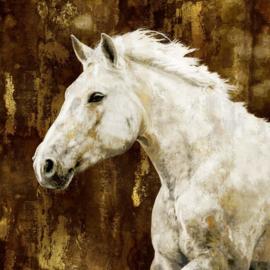 100 x 100 cm - Glasschilderij paard - schilderij fotokunst dieren - UV geprint - foto print op glas