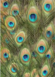 Plexiglas schilderij - Veren Pauw