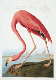 Plexiglas schilderij - Flamingo - 80x120 cm