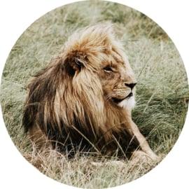 80 cm rond - Glasschilderij dieren - rond schilderij fotokunst - Leeuw - foto print op glas --