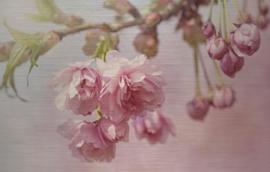 148 x 98 cm - Schilderij - Roze Bloemen - dibond fotokunst op aluminium