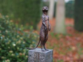Beeld brons - Tuinbeeld - beeld stokstaartje - bronzartes