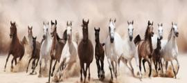 160 x 60 cm - Glasschilderij - schilderij fotokunst - Galopperende Paarden - foto print op glas