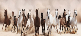 Glasschilderij - Galopperende Paarden - 160x60 cm