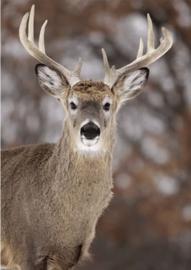 80 x 120 cm - Plexiglas fotokunst - schilderij dieren - Hert