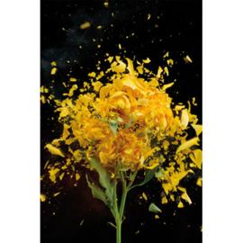 80 x 120 cm - Schilderij Dibond - Foto op aluminium - Fotokunst - Gele roos - Mondiart - bloemen