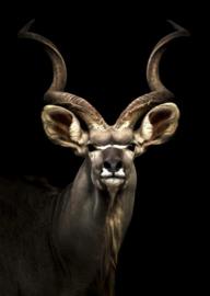 80 x 120 - Glasschilderij Antilope - schilderij fotokunst - foto print op glas --