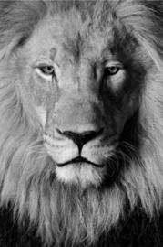 Foto op hout - Leeuw