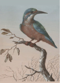 80 x 120 cm - Plexiglas schilderij - ijsvogel - foto print op acryl - klassieke kunst afbeelding op acryl - oude meesters!