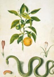 80 x 120 cm - Plexiglas schilderij - Planten - kunst afbeelding op acryl