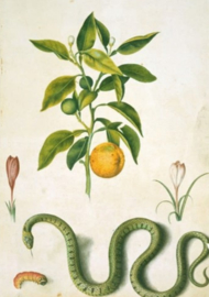 Plexiglas schilderij - Planten
