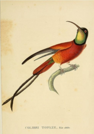Plexiglas schilderij - Vogel