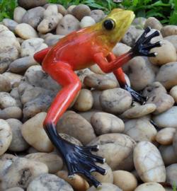 Tuinbeeld - glassculptuur - beeld - rode kikker