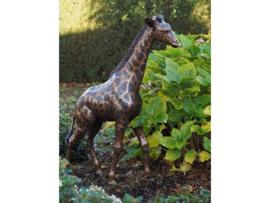 Tuinbeeld - groot bronzen beeld -  kleine giraf - Bronzartes