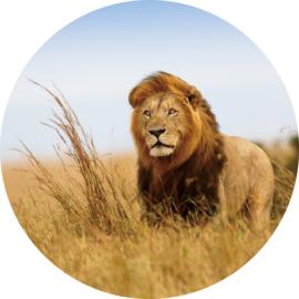 rond 100 cm Glasschilderij leeuw - schilderij fotokunst dieren - foto print op glas