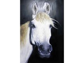 100 x 150 cm - Olieverf schilderij - schilderij schimmel paard - dieren - handgeschilderd