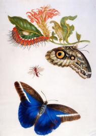 Foto op hout - Vlinders