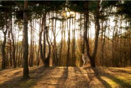 Plexiglas Schilderij - Hert in een bos - 120x80 cm