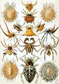 Foto op hout - Spinnen
