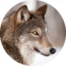 80 diameter - Glasschilderij - rond schilderij fotokunst - Wolf - foto print op glas