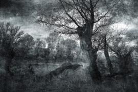 80x120 - Glasschilderij - Verlaten bos - schilderij fotokunst - Foto print op glas