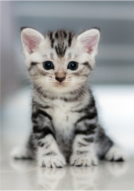 Foto op hout - Kitten